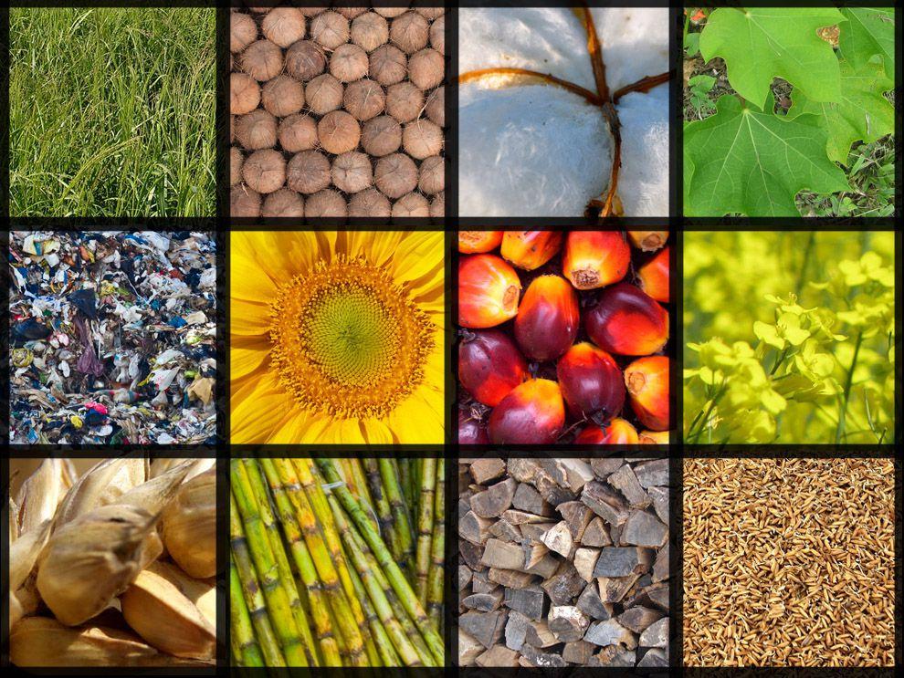 Biomass - cleanbuild