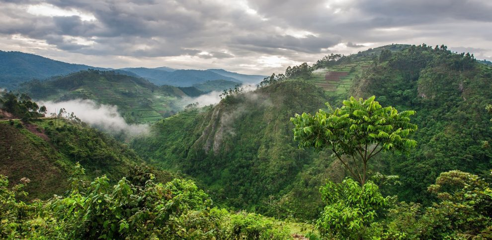 africa's mountain forests - cleanbuild